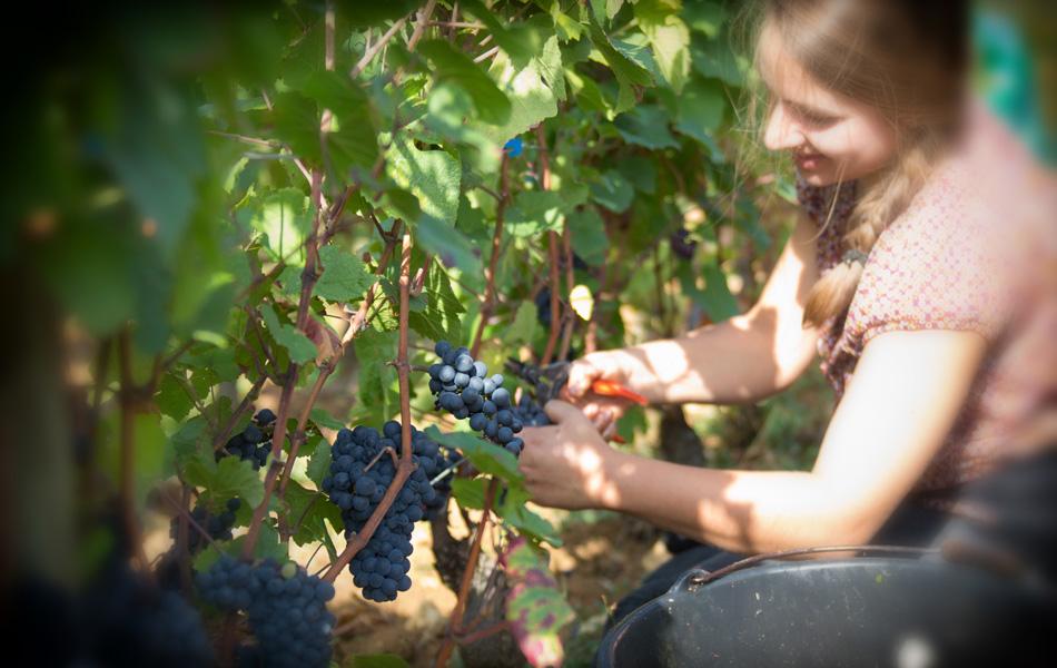 Domaine Comte Senard, Aloxe Corton, Vin de Bourgogne, Armelle Photographe